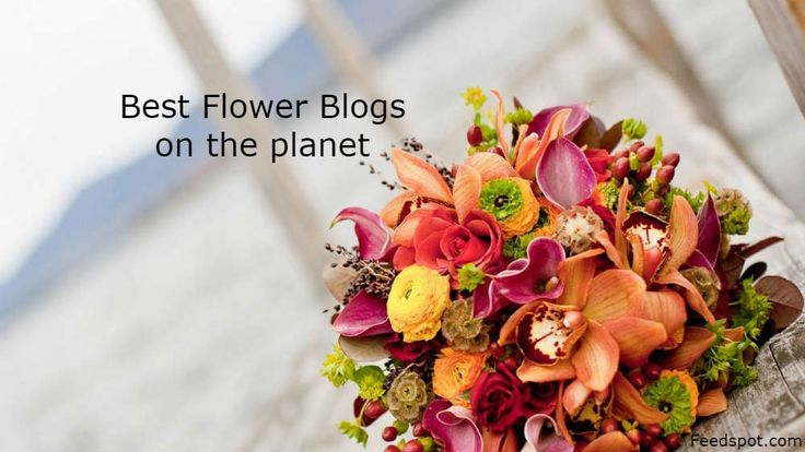 Periwinkle Flowers is listed as one of the top 100 flower blogs on feedspots list !