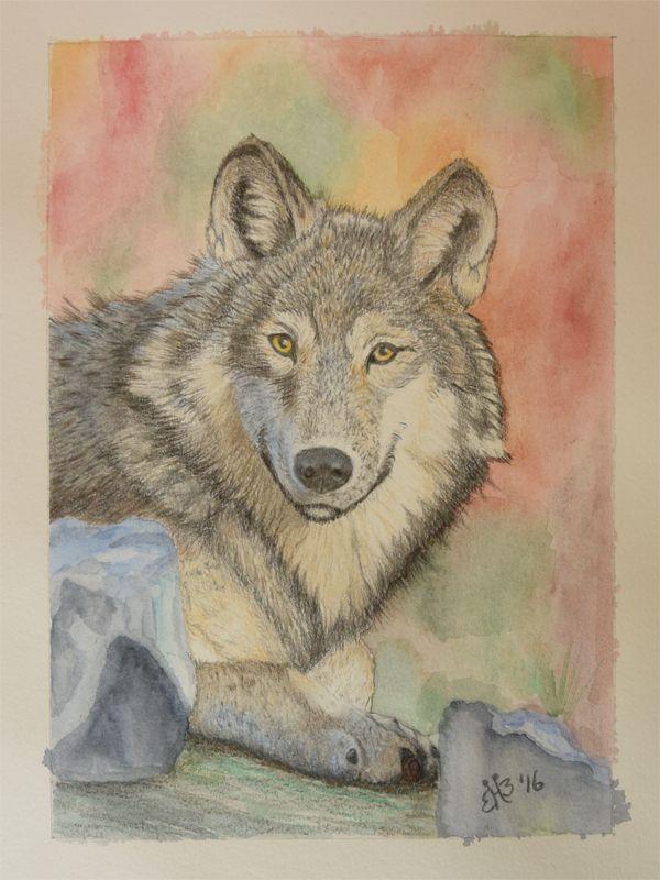 wolf getekend met kleurpotlood en de achtergrond gemaakt met aquarel