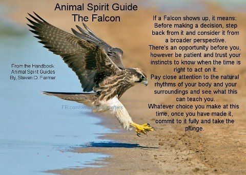 Animal Spirit Guide : The Falcon  I have been seeing so many of these lately..Instead of Hawks??
