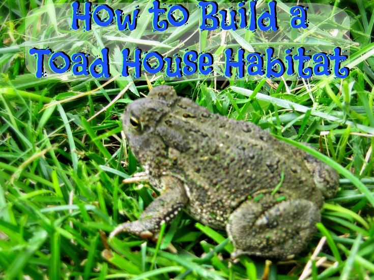 The 25 best toad house ideas on pinterest frog house Make your own toad house