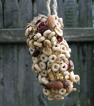 pine cone bird feeders... I usually do this with just bird seed, but this looks much more appetizing!