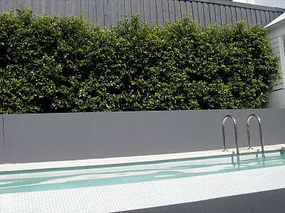Lilly pilly hedge and pool wall colours grey, white
