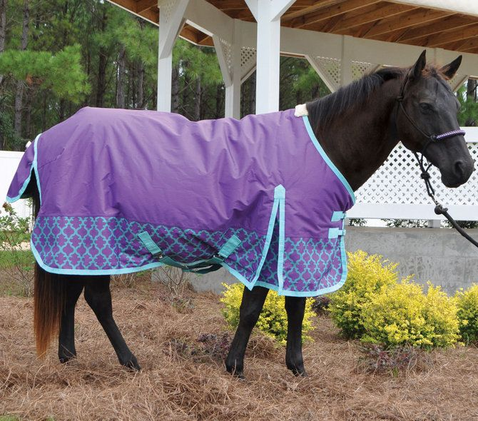 Purple Horse Rugs Rugs Ideas
