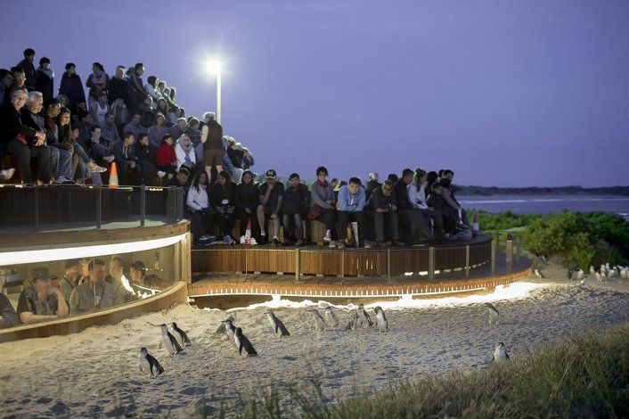 Phillip Island Penguin Parade Day Tour (with Lunch) • Tours To Go