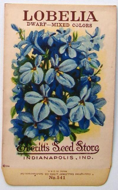 EVERITT'S SEED STORE,  Lobelia 541, Vintage Seed Packet