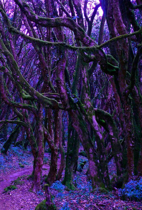 A purple forest, possible setting for a m/m fantasy story?