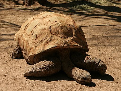 2015 Reid Park Zoo Coupons & Discounts - The Know and Go