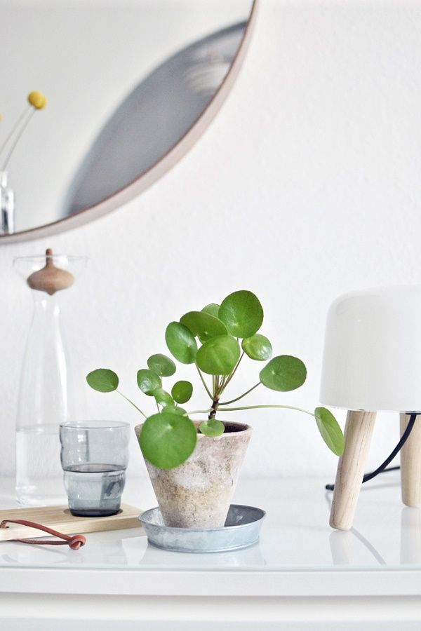 Home Gem: Chinese Money Plant – Studio
