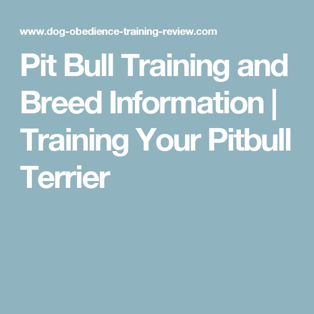 Pit Bull Training and Breed Information | Training Your Pitbull Terrier