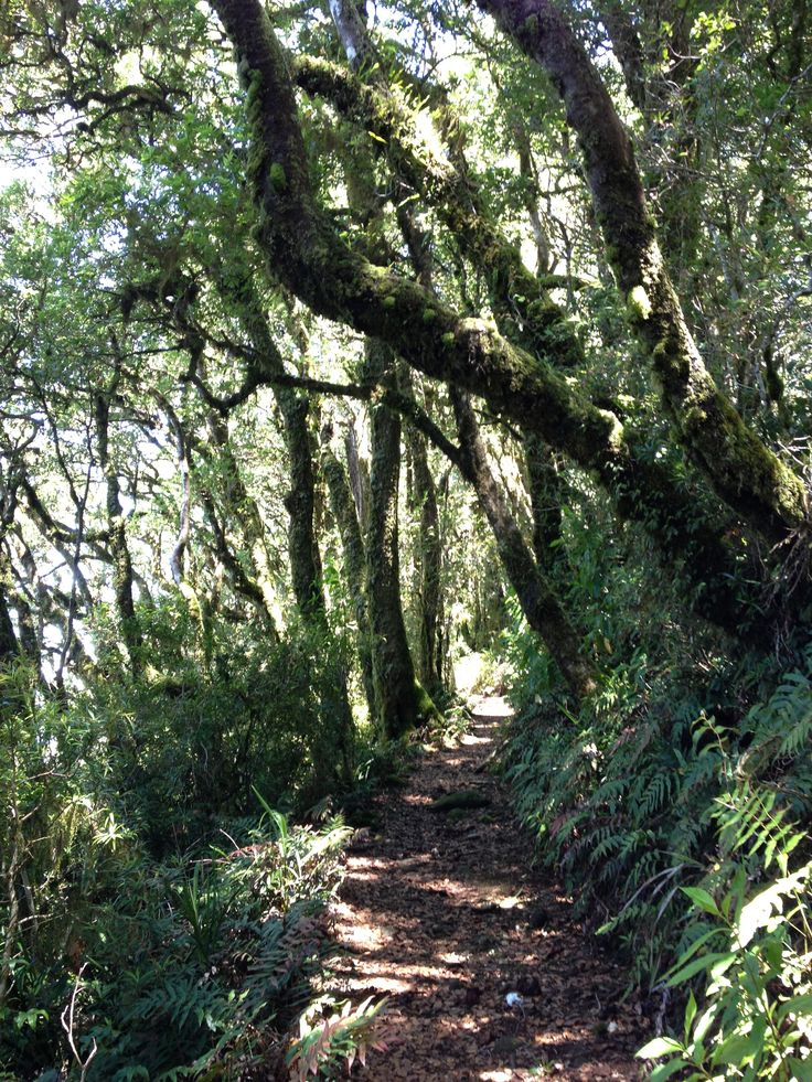 Trail hiking - 22 kms from Binna Burra to O'Reilly's in the Lamington National Park Australia.