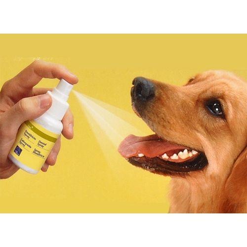 Dentifrice en spray pour chiens