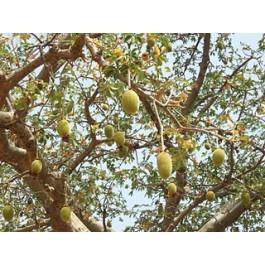 Baobab fruit is zeer voedzaam en vol met natuurlijke vitamines, antioxidanten en mineralen. Baobab kan worden gebruikt als onderdeel van een caloriearm dieet en als dagelijkse voedingssupplement    Baobab fruit kan helpen bij aandoeningen zoals, multiple sclerose, diabetes, jicht, constipatie, nier aandoeningen, osteoporose, IBS en ME (Myalgische Encephalopathie).