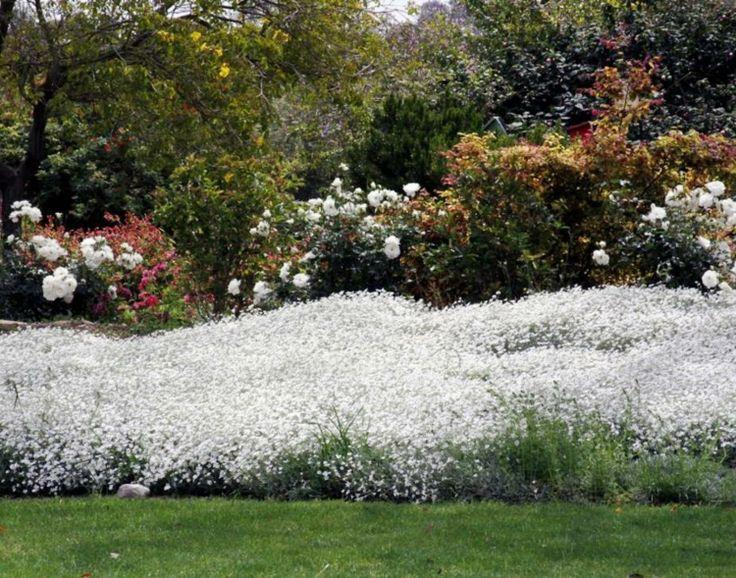 143 besten Gartenpflanzen Bilder auf Pinterest Gardening - gartenpflanzen