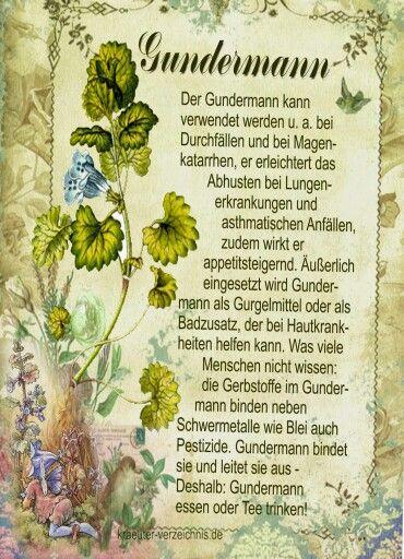 Gundermann                                                                                                                                                     Mehr