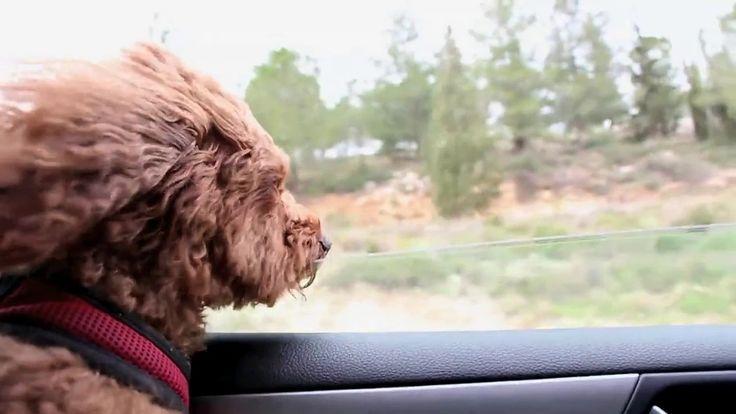 Pies - wiatr we włosach, timelapse