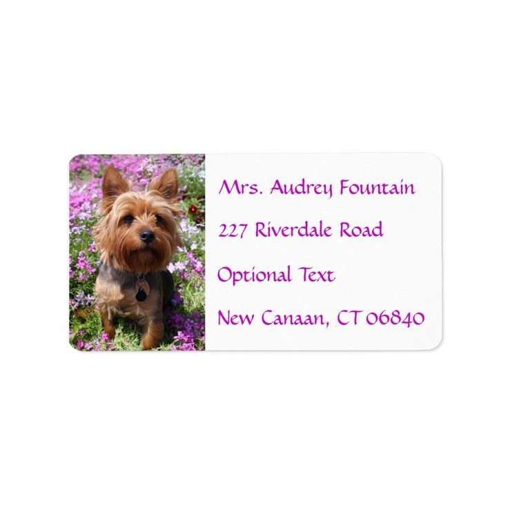 Yorkies For Sale In Georgia In 2020 Puppy Names Yorkshire Terrier Puppies Yorkshire Terrier