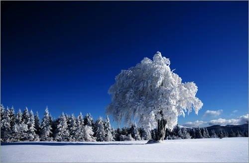 """Poster 90 x 60 cm - """"Winterbaum"""" von Gregor Luschnat - auch in anderen Größen und als Leinwandbild erhältlich von POSTERLOUNGE, http://www.amazon.de/dp/B00BCZ0H4G/ref=cm_sw_r_pi_dp_2Gjmrb13NB0P4"""