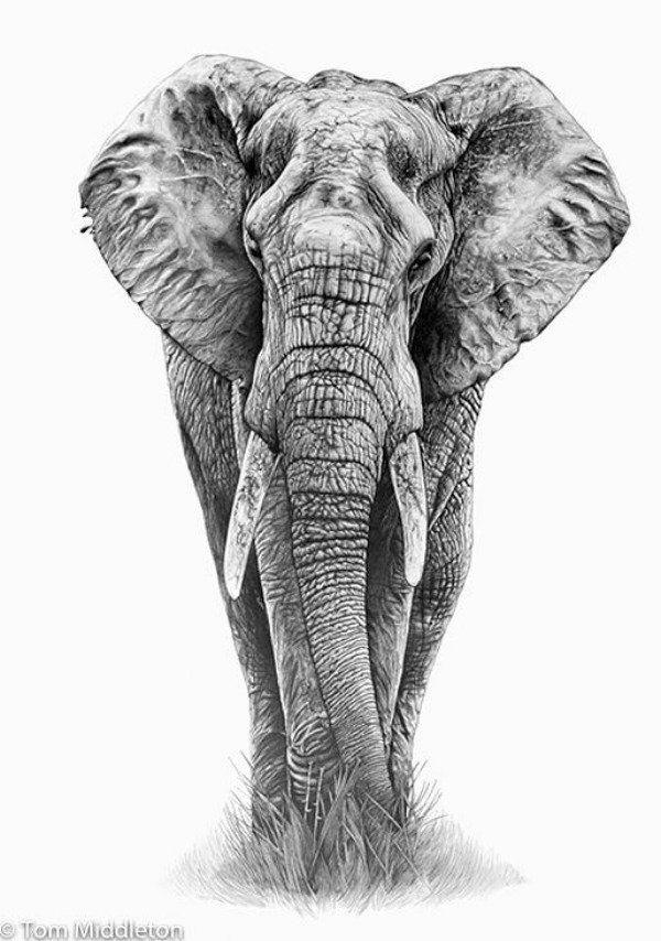 elephant pencil drawing Más