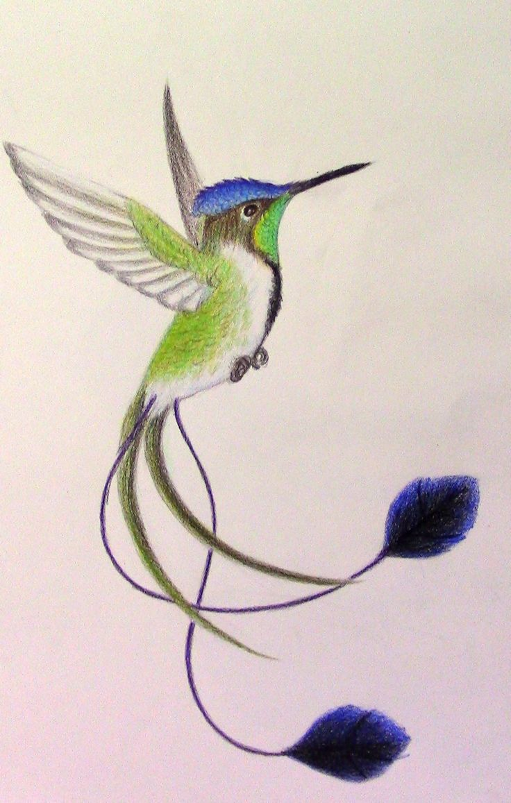 Marvellous Spatuletail Hummingbird by mysteriouswhitewolf
