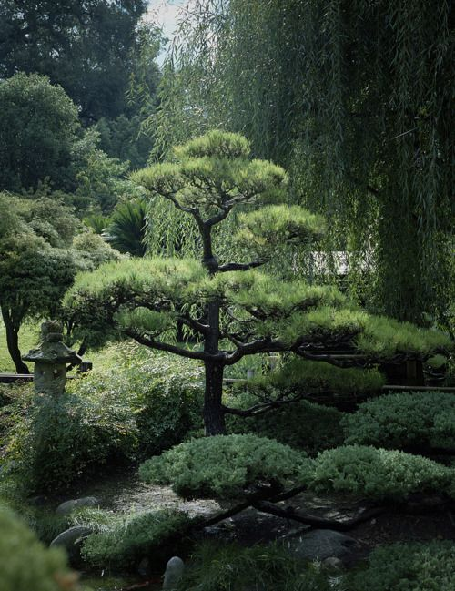 417 best images about japanese and other great garden for Zen garden trees