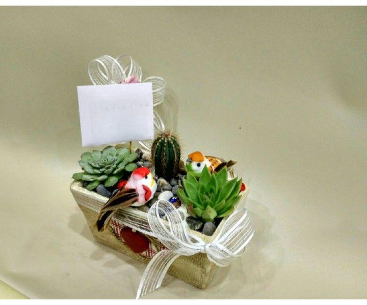Sukulent - Saksı Çiçeği, Seramik saksıda sukulentler, Isparta teraryum gönderimi, Yiğitbaşı Çiçekçilik