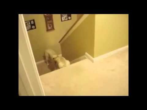 Funny Video: Do We Teach Like Dogs Or Like Cats?