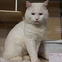 Adopt A Pet :: Roger - Franklin, NH
