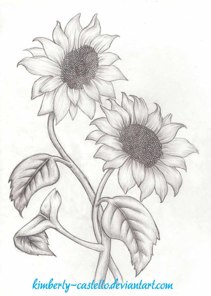 Sunflowers Sketch by kimberly-castello on DeviantArt