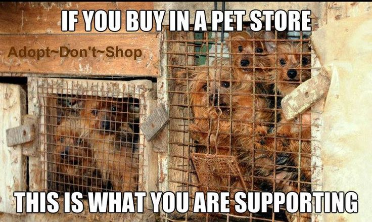 Pet Store Puppies Come From PUPPY MILLS !!!!