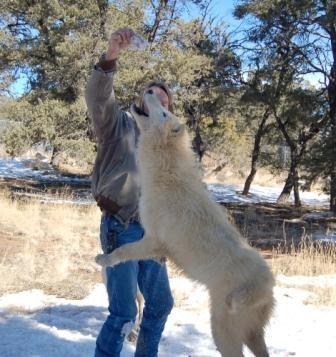 Canis leapus