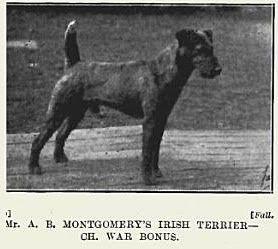 1925 Irish Terrier
