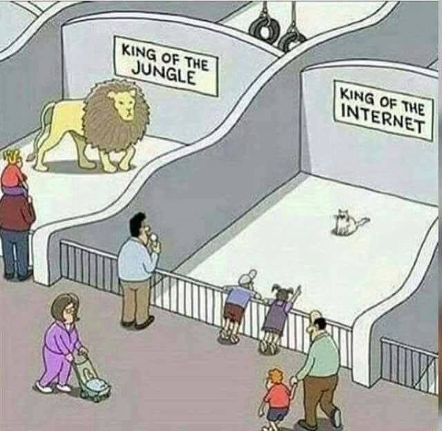 King of the jungle & King of the Internet http://www.traveling-cats.com (cat cartoons, animal cartoons, funny cartoons, lions, cats, king of the jungle, king of the internet, best cartoons)