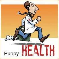 All about pet's health and over the counter medications, like human aspirin and liquid aspirin designed for dogs, etc.