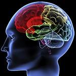 brain, Alzheimer's, descent, stages, AD, Alzheimer's disease