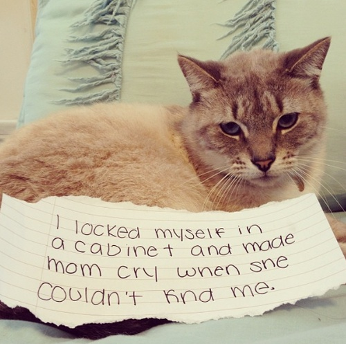 ....and didn't even meow when she was calling my name