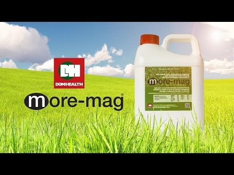 MORE-MAG ADVERT - YouTube