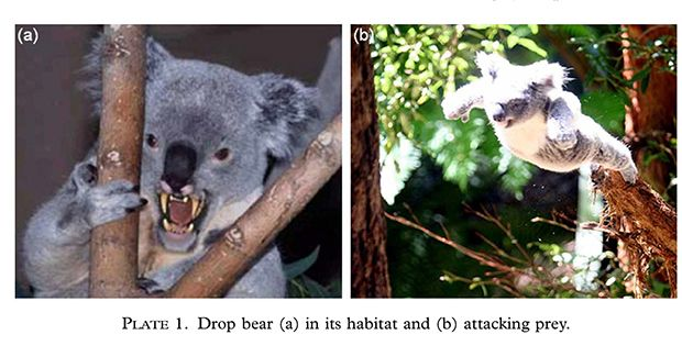 Drop bears prefer travellers, says study - Australian Geographic