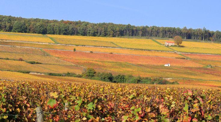 Le village de Ladoix-Serrigny - et ses Climats de Ladoix et Corton