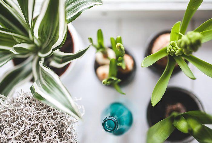 Φυτά που λειτουργούν ως ιονιστές  #Υγεία #Φυτά