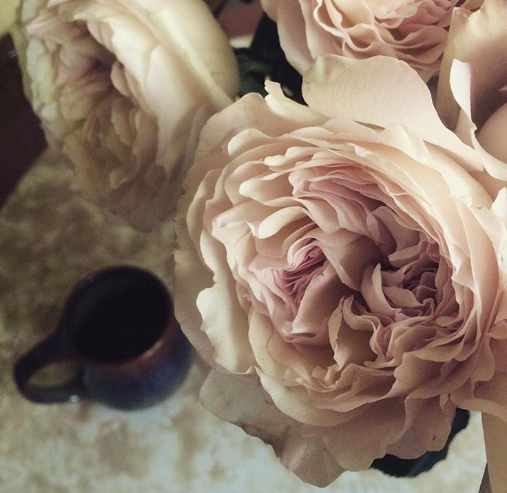 Garden roses and coffee for the morning sunshine.