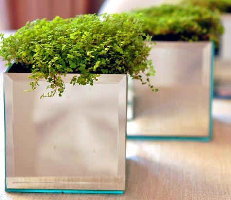 Mirrored Planter Boxes