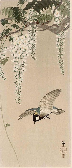 """Great-Tit and Wisteria"" by Ohara Koson"