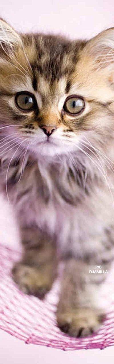 Adorable Kitten - by Rachael Hale