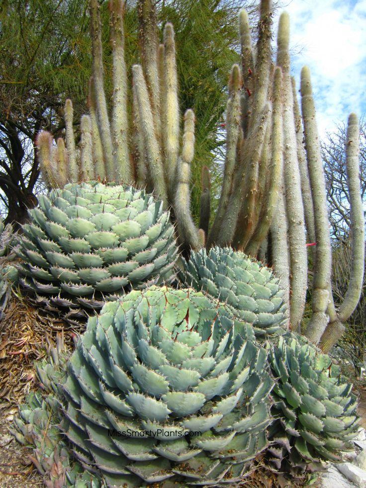 Les 3202 meilleures images du tableau succulentes sur for Plante grasse jardin