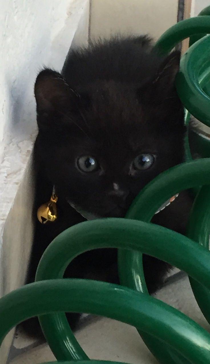 Cute Noir!