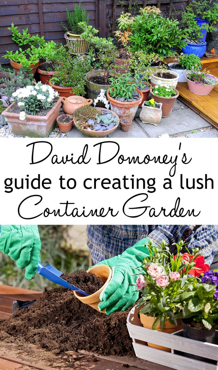 How To Create A Luscious, Low Maintenance Container Garden