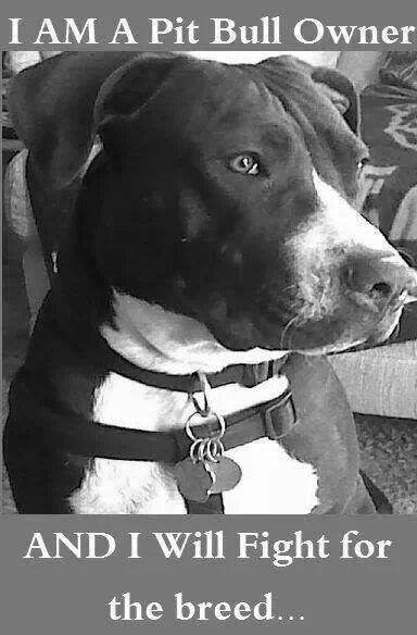 <3 The American Pit Bull Terrier