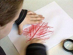 Schooltv: Bladnerven - Hoe maak ik bladnerven? - In de herfst zie je bladeren op de grond. Als je goed naar een boomblad kijkt, zie je lijntjes. Die lijntjes heten nerven. herfst  tekenen  nerf  blad  knutselen