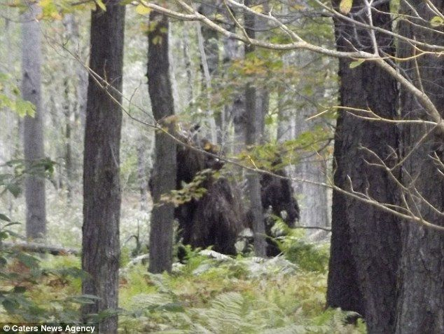 Bigfeet? This image, taken just two weeks ago near Bradford, Pennsylvania, is believed to show two of the mysterious creatures known as Bigf...