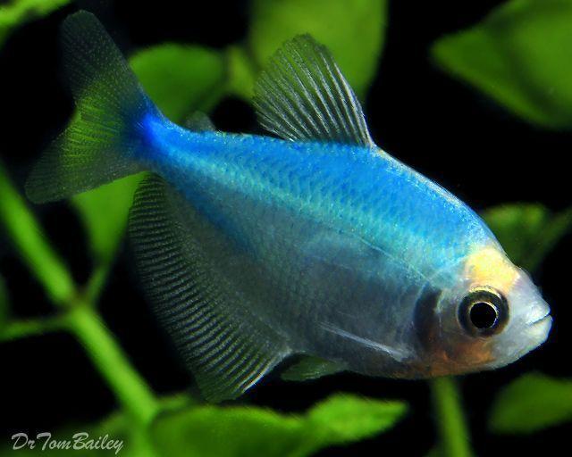 Colorful Fish 41 Aquarium Fish Colorful Fish Fish